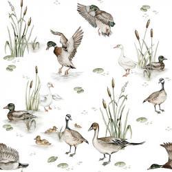 Tapeta Ducks Lake